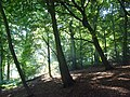 Stockfield Wood, Stokenchurch - geograph.org.uk - 1013322.jpg