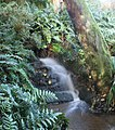 Stream Garden Trengwainton 3 (280056518).jpg