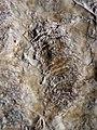 Stromatolithe—Foum-el-Agbet.JPG