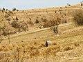 Studnička - panoramio (3).jpg