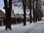 Suchdol - stromořadí lip srdčitých v Gagarinově ulici na Budovci (13).jpg