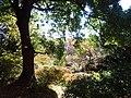 Sunbeams streaming through leaves in the Koishikawa Botanical Gardens PC120038.jpg