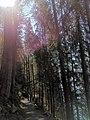 Sunshine walk in the woods.jpg