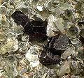 Tantalite-Quartz-Lepidolite-170571.jpg