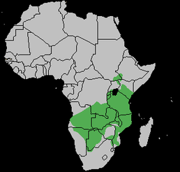 Taurotragus oryx distribution.png
