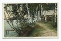 Tens under birches, Saranac Lake, Adirondacks, N. Y (NYPL b12647398-74619).tiff
