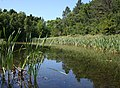 The Upper Lake in June - geograph.org.uk - 1375852.jpg