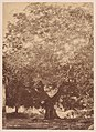 The Walnut Tree of Emperor Charles V, Yuste MET DP-387-004.jpg