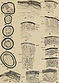 The development of nestling feathers (1907) (20704564459).jpg