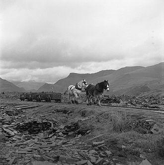 Nantlle Railway - The horse drawn train at Dyffryn Nantlle in 1959