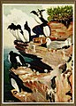 The human side of birds (1917) (14770494373).jpg