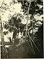 The lower Amazon; a narrative of explorations in the little known regions of the state of Pará, on the lower Amazon (1914) (14585644430).jpg