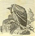 The royal natural history (1893) (14784510502).jpg