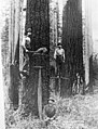 Three loggers using axes and two-man saw to chop down tree, 1888-1900 (INDOCC 1602).jpg