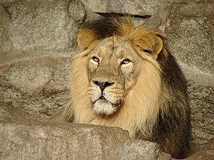 Tierpark 06 034.jpg