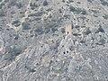 Torre di Roccapreturo.jpg