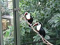 Toucan (2363885156).jpg