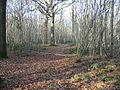 Track through Pitt Wood - geograph.org.uk - 1100338.jpg