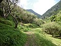 Trail of Mount Awa, Okinawa 2018 01.JPG