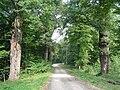 Tree-lined path in Wzgórza Strzelińskie.jpg
