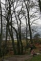 Tree Pruning by the National Trust - geograph.org.uk - 343111.jpg