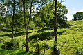 Trees by the Lakeside and Haverthwaite Railway (6606).jpg