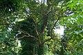 Tropical trees, Koh Chang, Thailand.jpg