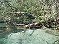 Turtles along Weeki Wachee River.JPG