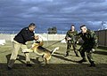 US Navy 070226-N-6060O-355 Master-at-Arms 2nd Class Jacob L. Pinkas handles Arco, a Navy working dog, while she demonstrates an attack maneuver on Master Chief Petty Officer of the Navy (MCPON) Joe R. Campa Jr.jpg