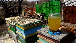 Beekeeping in Ukraine - Hives in the spring near Kropyvnytskyi Ukraine