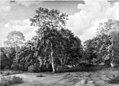 Ulrich Baudissin - Forest Scenery from Præstevangen near Frederiksborg - KMS512 - Statens Museum for Kunst.jpg