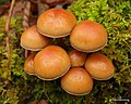 Unknown Mushroom (4503979869).jpg