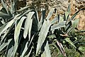 Végétaux à La Roque sur Pernes.JPG