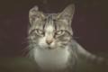 VAN GOGH CAT.png