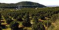 Vall de la Casella.jpg