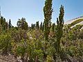 Valle de Jere-CTJ-IMG 5663.jpg