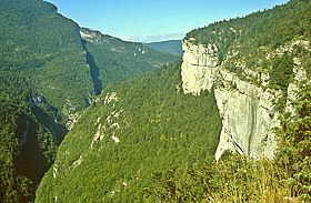 Image illustrative de l'article Forêt du Vercors