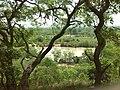 Vegetation1.jpg