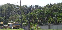 Vegetation near Florida (Puerto Rico).jpg