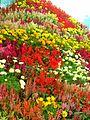 Velly of flower.jpg