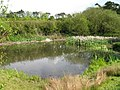 View of Buttsole pond, Eastry - geograph.org.uk - 1306725.jpg
