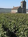 Vigne Pinot noir (Leuvrigny) Cl.J.Weber01 (23569170092).jpg