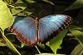 Vlinder (4023201452).jpg