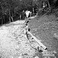 Vol vleče vlake, Stranj 14, Gorenje Vrhpolje 1952 (2).jpg