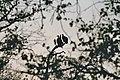 Vultures silhouette.jpg