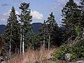 Vylet k Cernemu jezeru Sumava - 9.srpna 2010 274.JPG