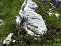 WLE Nebelhorn Höfartsweg 2.jpg