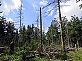 Waldsterben.jpg
