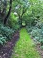 Waldweg im Westerwald (21566857585).jpg