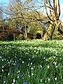 Walled Garden, Warley Place - geograph.org.uk - 142697.jpg